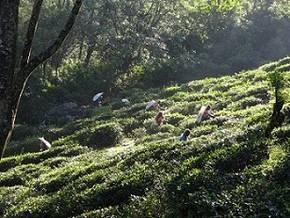 Fahrradurlaub SRI LANKA: Radreise durch das tropische Paradies Bild 1