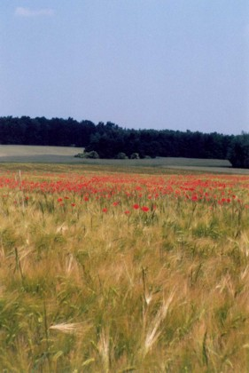 Radtour ins Storkower Land Bild 1