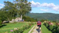 Powertour - Mountainbiken im Nordschwarzwald Bild 0