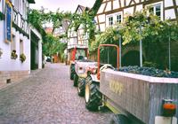 Radweg Deutsche Weinstraße Bild 2